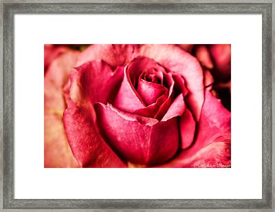 Softly Framed Print by Wallaroo Images