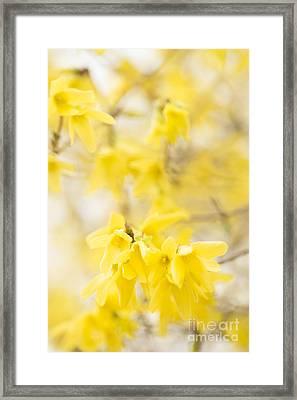 Softly Yellow Framed Print