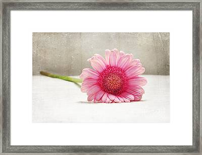 Softness In Pink Framed Print by Randi Grace Nilsberg