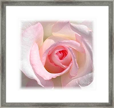 Softness Framed Print by Kathleen Struckle