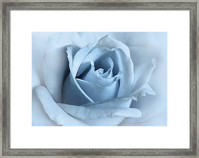Softness Of A Blue Rose Flower Framed Print by Jennie Marie Schell