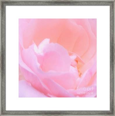 Softness Of A Rose Framed Print by Kathleen Struckle