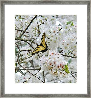 Softness Of Spring Framed Print