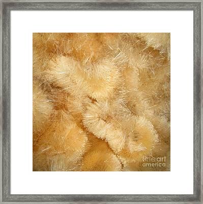 Softness. Square Format Framed Print