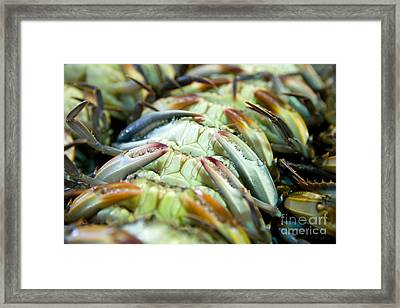 Softshell Blue Crabs On Their Backs Framed Print
