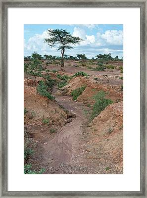 Soil Erosion Due To Water Runoff. Framed Print by Tony Camacho