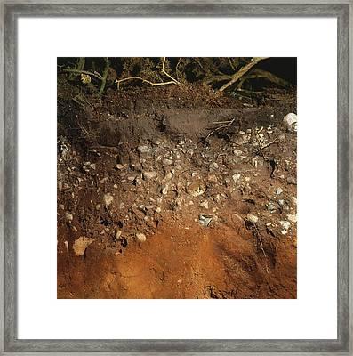 Soil In Acidic Heathland Framed Print by Dorling Kindersley/uig