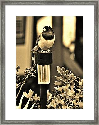 Framed Print featuring the photograph Solar Light Sitting by VLee Watson