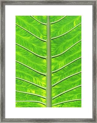 Solar Panel Leaf Veins Framed Print