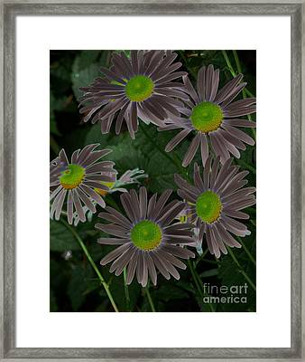 Solarize Framed Print by Chalet Roome-Rigdon