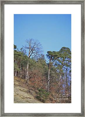 Framed Print featuring the photograph Solid Ground by Felicia Tica