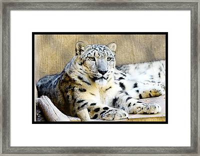 Solid Framed Print by Susanne Still