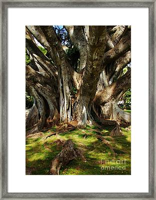 Solidly Rooted Framed Print by Craig Wood