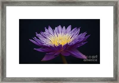 Solita Side...   # Framed Print by Rob Luzier