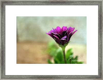 Framed Print featuring the photograph Solitaire by Chris Anderson