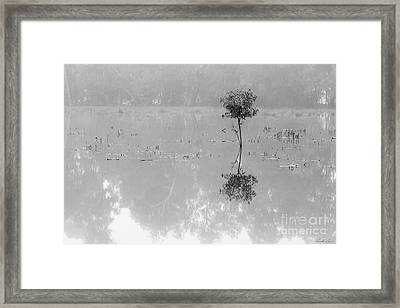 Solitaire Framed Print by Linda Lees