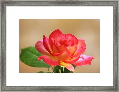 Solitare Framed Print