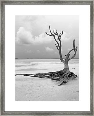 Solitary 1 Framed Print by Sarah-jane Laubscher