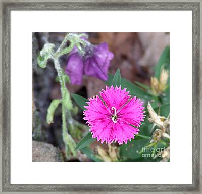 Solitary Framed Print by Andrea Anderegg