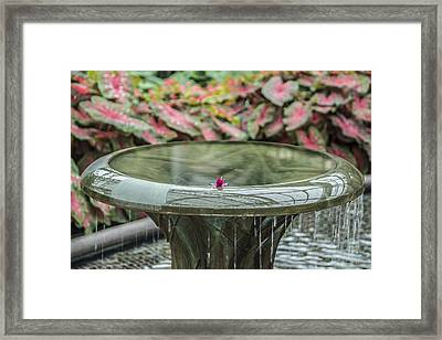 Solitary Bather Framed Print by Jennifer Nelson