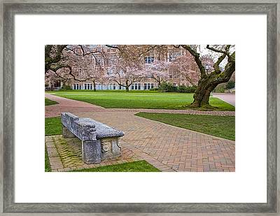 Framed Print featuring the photograph Solitary Bench by Sonya Lang