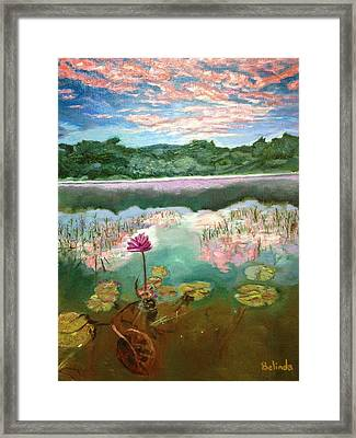 Solitary Bloom Framed Print by Belinda Low