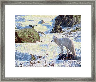 Solitary Fox Framed Print