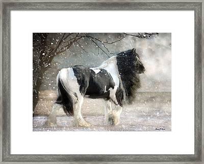 Solitary Framed Print by Fran J Scott