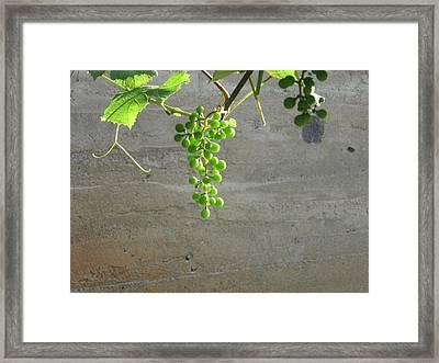 Solitary Grapes Framed Print