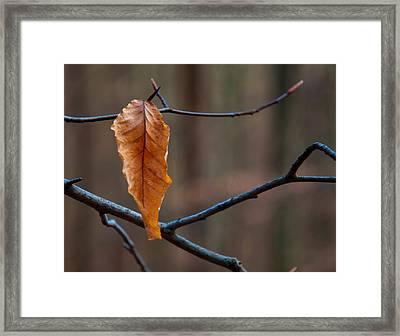 Solitary Leaf Framed Print by Chris Flees