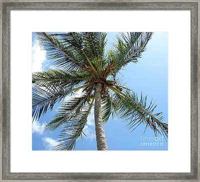 Solitary Palm Framed Print