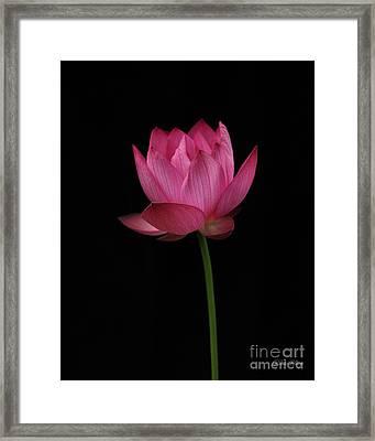 Red Lotus Framed Print by Dodie Ulery