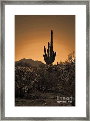 Solitary Saguaro Framed Print by Deb Halloran
