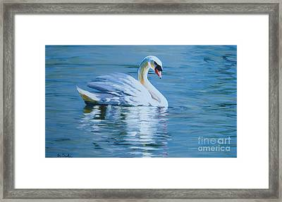 Solitary Swan Framed Print