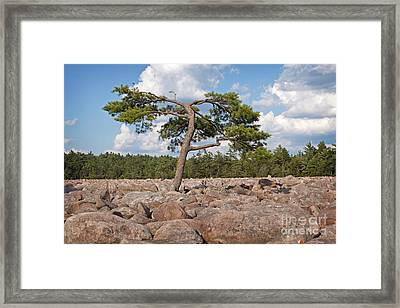 Solitary Tree Amidst Field Of Boulders Framed Print