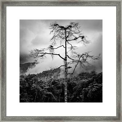 Solitary Tree Framed Print by Dave Bowman