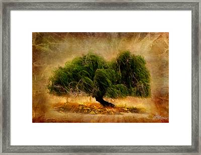 Solitary Tree Glow Framed Print by Jacque The Muse Photography