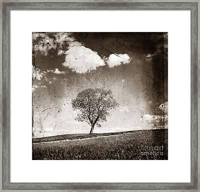 Solitary Tree In Limagne Landscape. Auvergne. France Framed Print by Bernard Jaubert