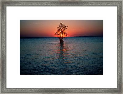 Solitary Tree In The James River Framed Print