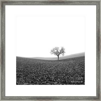 Solitary Tree In Winter. Auvergne. France Framed Print