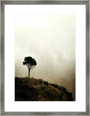 Solitary Tree Framed Print by Michelle Calkins