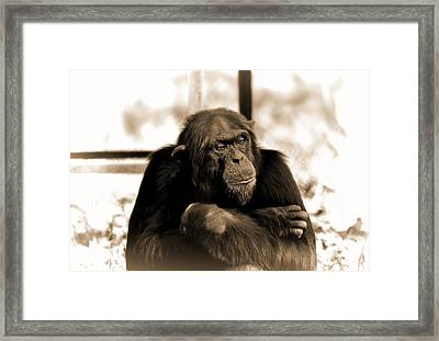 Solitude Framed Print by Aditya Misra