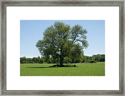 Framed Print featuring the photograph Solitude by Courtney Webster