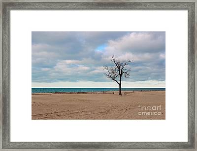 Solitude Framed Print by Dipali S