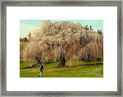 Solitude In Bloom Framed Print by Tami Quigley