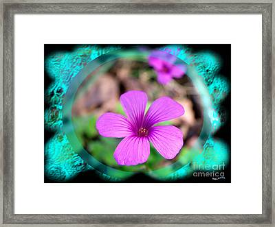 Solo Framed Print by Bobby Hammerstone