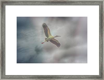 Framed Print featuring the photograph Solo Flight by Dennis Baswell