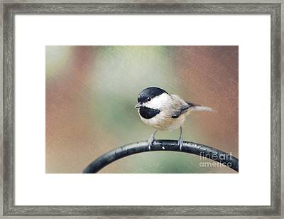 Solo Flight Framed Print
