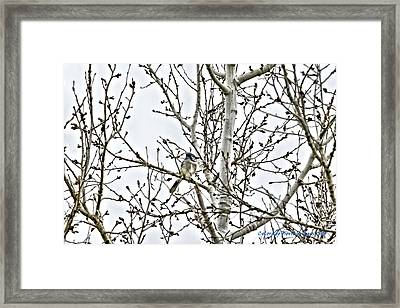 Solo Jay Framed Print by Rebecca Adams