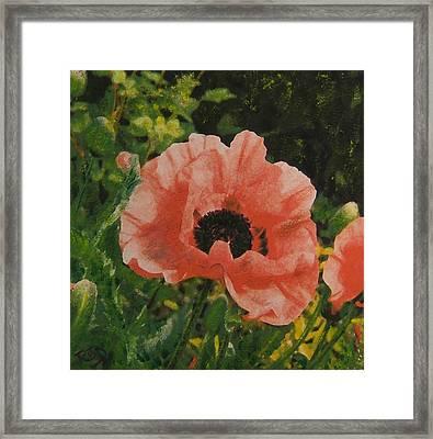 Solo Poppy Framed Print